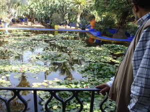 Mustapha checking out Majorelle's Giverny-esque water lilies